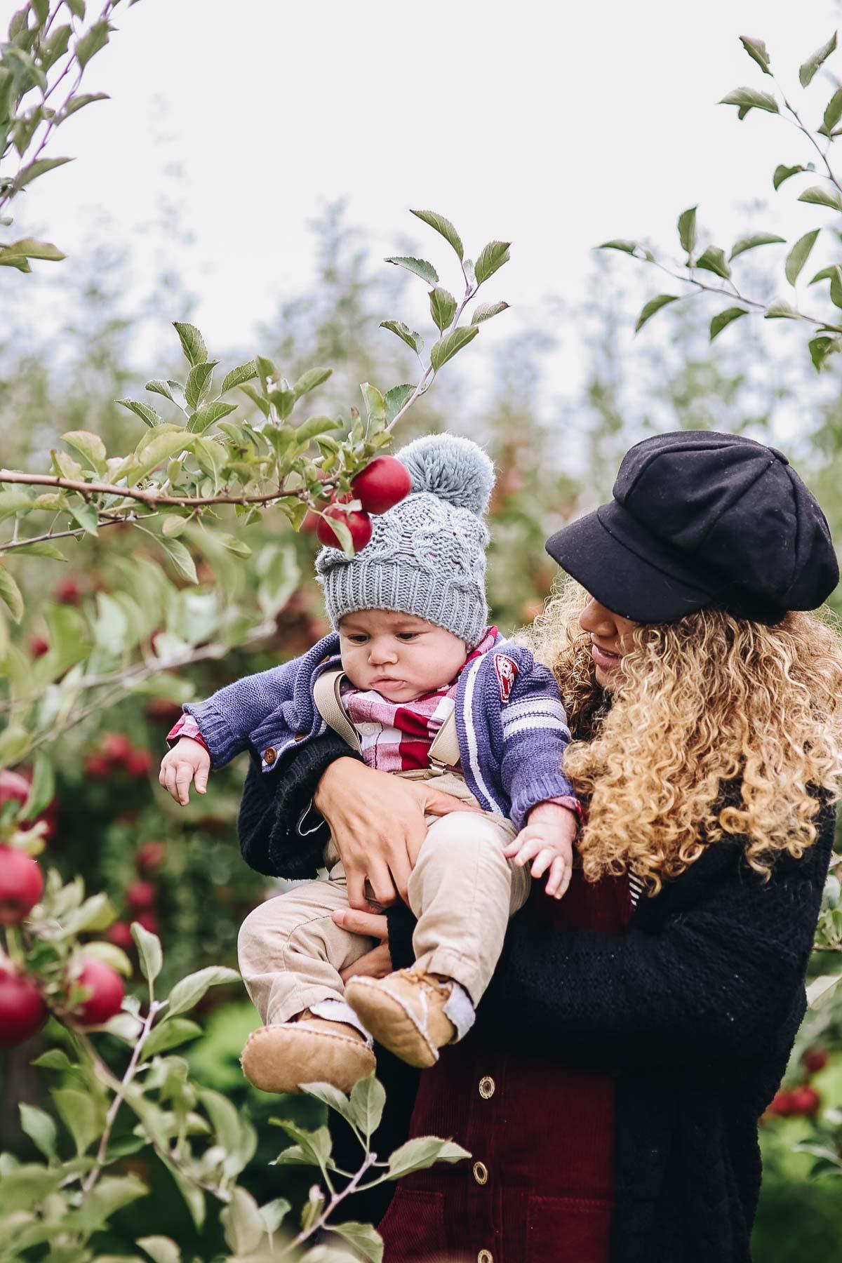 apple orchard family photos