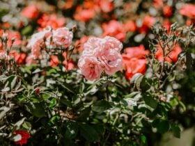 garden planning at Lowes garden center