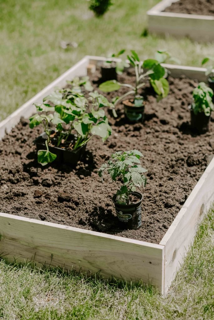 raised garden bed veggies